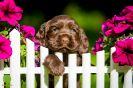 4 Wochen alt :-) unsere coco urmel Welpen_6